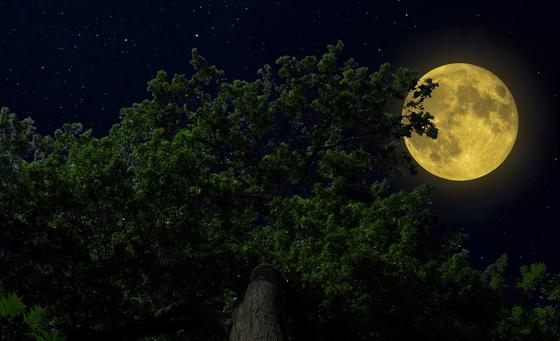 달을 보기 위해선 연못이 아니라 하늘을 바라봐야 한다. [중앙포토]