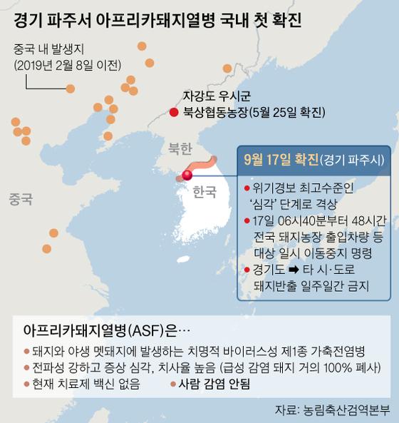 첫 발생 돼지열병 원인 오리무중…'북한 멧돼지' 전파 여부 촉각