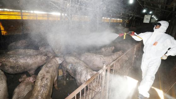 국내에서 처음으로 가축전염병인 아프리카돼지열병(ASF)이 발생한 17일 오후 충남 홍성군 한 돼지농가에서 농가 관계자가 아프키카 돼지열병 확산을 막기 위해 방역활동을 펼치고 있다. [뉴스1]