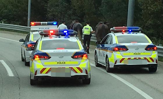 20일 오후 경기 평택화성고속도로 양감 나들목 인근 농장에서 말 세마리가 탈출해 고속도로로 난입했다. 인명피해는 없었으며 20여 분만에 포획됐다. [사진 경기도소방재난본부 제공]