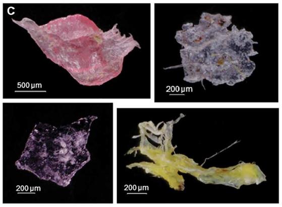 캘리포니아 해안 퇴적층에서 발견된 형형색색의 플라스틱 섬유와 조각들. [사진 사이언스 어드밴스]