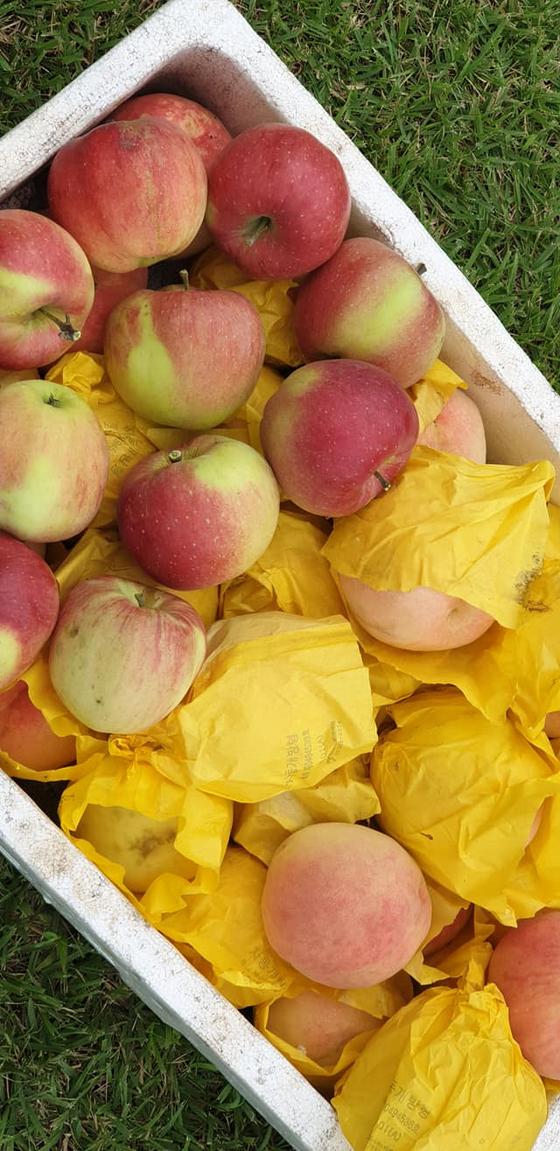추석이라고 아랫 마을 임씨아저씨가 복숭아와 사과를 박스 가득 보내셨다. 고맙게 잘 먹는다. [사진 권대욱]