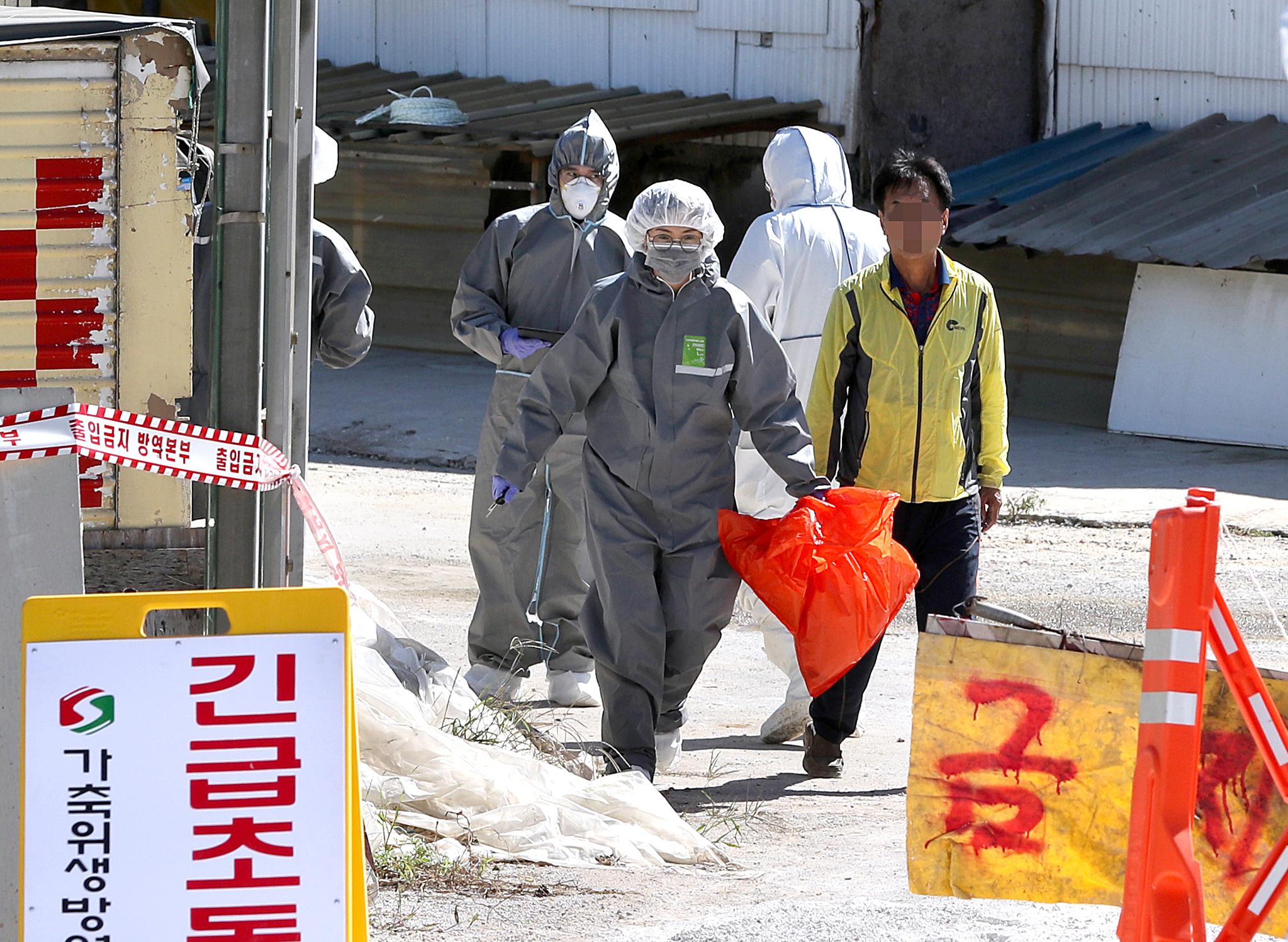 23일 오전 아프리카 돼지열병(ASF) 의심 신고가 접수된 경기도 김포시의 한 돼지농장에서 방역 관계자가 가검물이 담긴 것으로 보이는 봉투를 들고나오고 있다. [뉴시스]