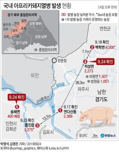 인천시 강화군 송해면에서 국내 5번째 아프리카돼지열병 확진 농가가 나왔다. [연합뉴스]