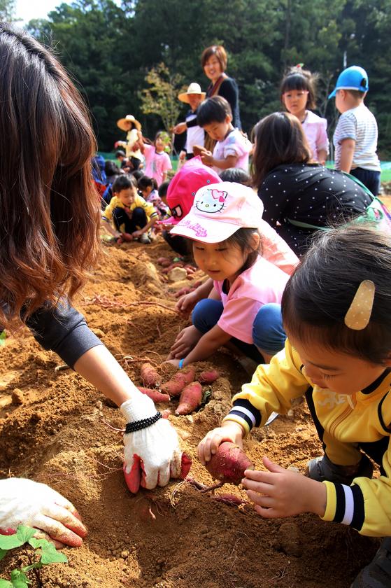 지난해 열린 청원생명축제 행사장에서 아이들이 고구마 수확 체험을 하고 있다. [사진 청주시]