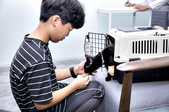 김민서 학생이 반려묘 다복이에게 간식 보상을 하고 있다. 다복이는 이날 병원 외출에 성공했다.
