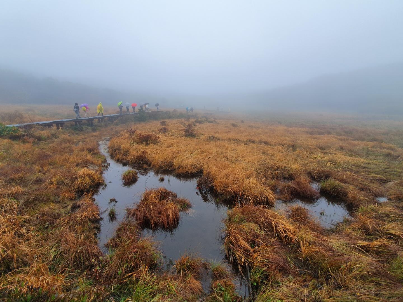 지난 5일 대암산 정상부에 있는 습지 '용늪' 탐방로를 걷는 사람들. 용늪은 여느 습지와 달리 식물이 썩지 않고 켜켜이 쌓이는 이탄층으로 이뤄졌다. 1년에 170일 이상 안개가 끼고 5개월 이상 영하를 밑도는 기온 때문이다. 최승표 기자