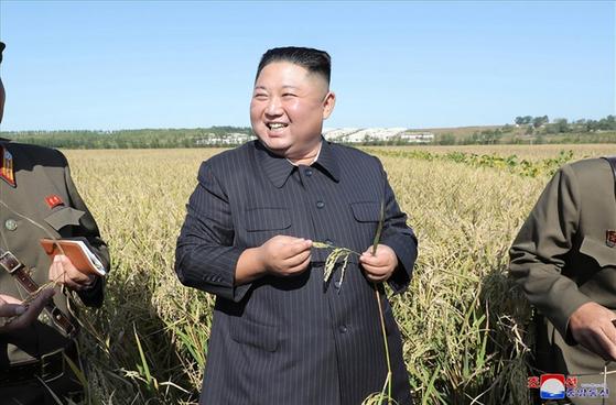 김정은 북한 국무위원장이 1116호 농장을 현지지도하며 벼이삭을 살펴보고 있다.[사진 연합뉴스, 조선중앙통신]