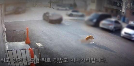 [사진 동물자유연대]