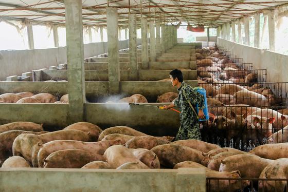 중국 쓰촨성 광안의 한 농가에서 돼지우리를 소독하고 있다. 지난해 8월 발생한 아프리카돼지열병이 중국 전역을 휩쓸며 중국은 돼지고기 품귀 현상을 빚고 있다. [로이터=연합뉴스]