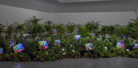 백남준의 설치작품 'TV 가든 1974/2002년' TV Garden 1974-1977 (2002) Single-channel video installation with live plants and color television monitors; color, sound  Courtesy Kunstsammlung Nordrhein-Westfalen, Dusseldorf. [사진 테이트 모던]