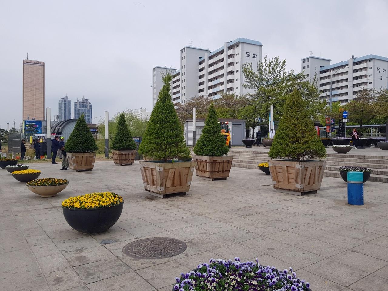 여의도 공원에 설치된 침엽수 일종인 주목