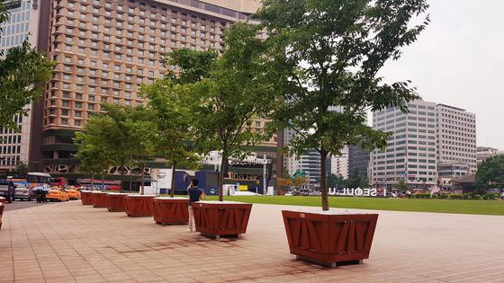 서울 시청광장에 설치된 느티나무 [사진 SK임업]