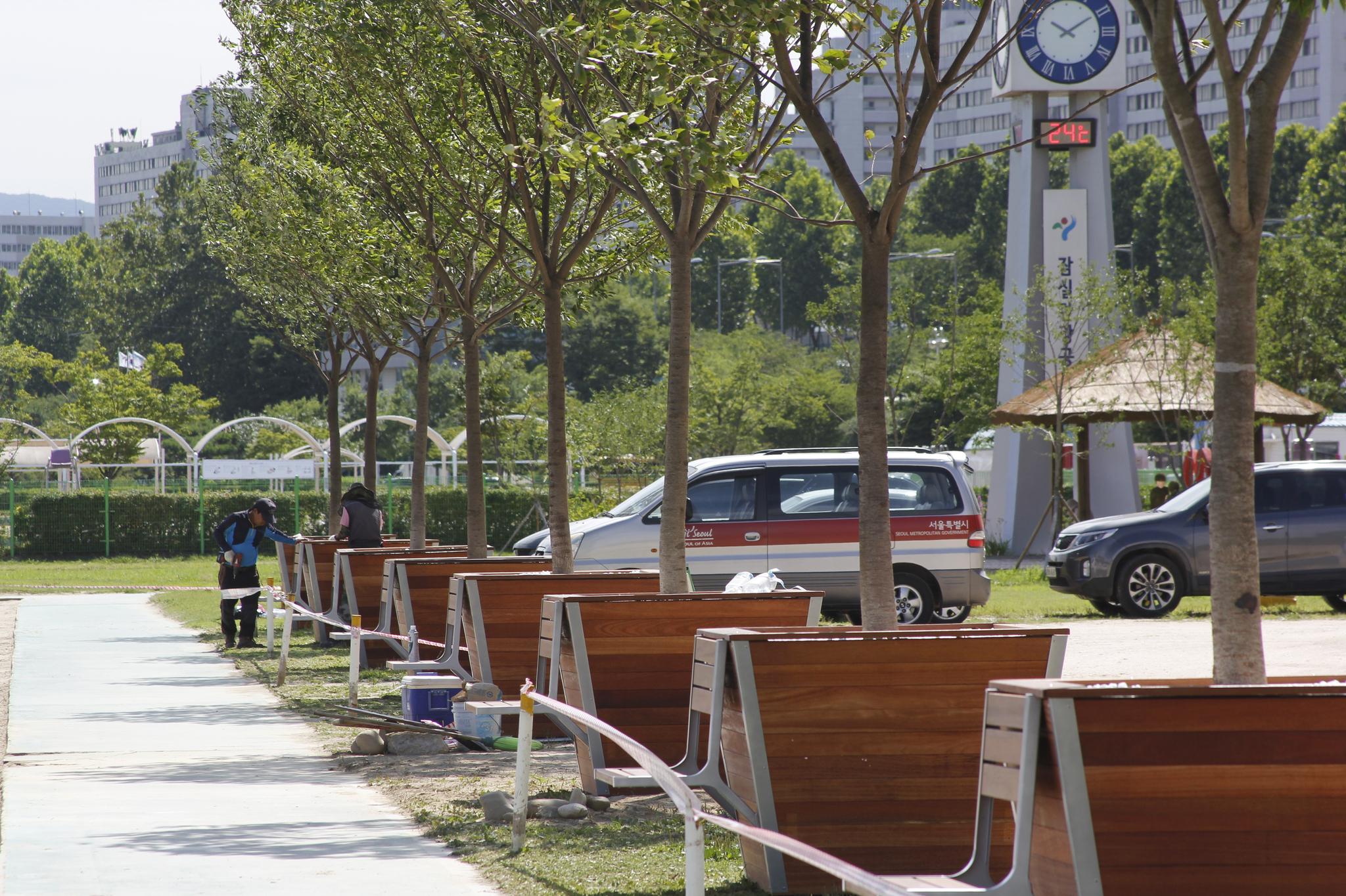 서울 잠실한강공원 비치발리볼경기장에 설치된 나무