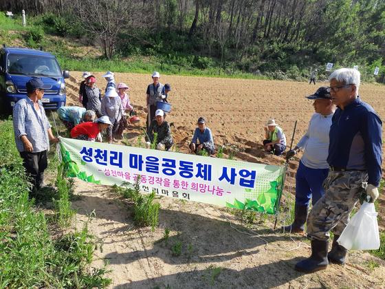 강원도 고성군 토성면 성천마을 주민들이 지난 5월 공동 경작지에서 밭갈이를 한 뒤 기념사진을 찍고 있다. [사진 탁창석 성천리 이장]