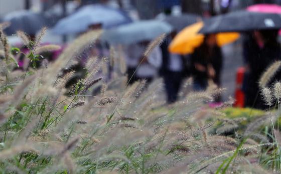 25일 아침까지 제주도와 영남, 강원영동지방에 비가 내리겠고, 26일 아침부터는 쌀쌀해지겠다. 지난 7일 오전 서울 광화문네거리에서 시민들이 우산을 쓰고 출근길 발걸음을 옮기고 있다. [뉴스1]