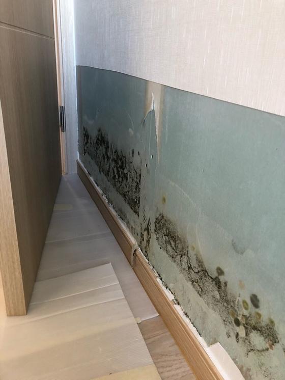 부산 해운대에 위치한 아파트에서 누수로 인해 벽면 곳곳에 곰팡이가 발생하고 있다. [사진 입주자대표위원회]