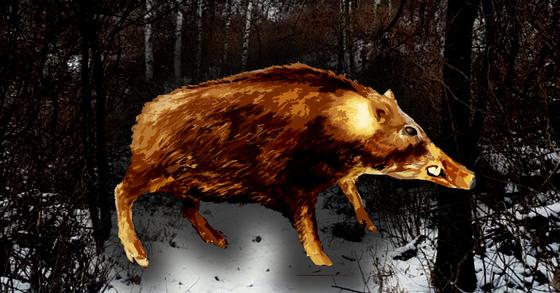 28일 부산 주택가에서 멧돼지 떼가 출몰해 경찰이 4마리를 사살하고 달아난 1마리를 수색하고 있다. [연합뉴스]