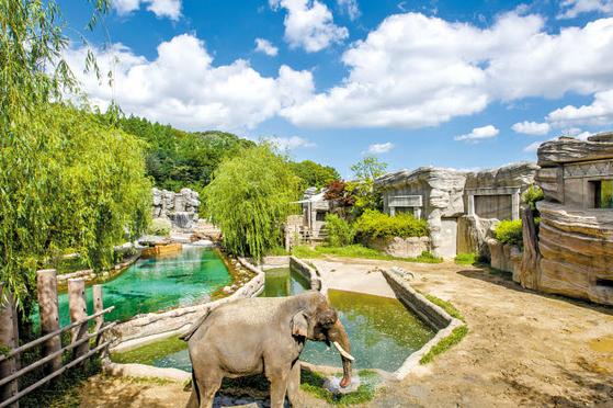 에버랜드 동물원 주토피아에는 2000여 마리의 동물이 전시돼 있다. [사진 에버랜드]