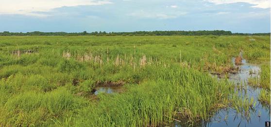 산림청이 추진한 해외 산림복구 사업 모습. 1 황무지였던 벨라루스 이탄지에 물을 공급해 복원한 습지,