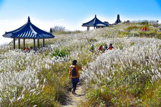 비슬산은 가을마다 억새밭이 은빛 장관을 이룬다. [사진 대구관광뷰로]