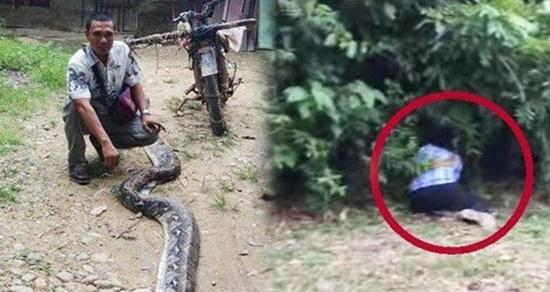 6m 뱀에 휘감긴 아내 구해낸 인도네시아 남성. [연합뉴스]