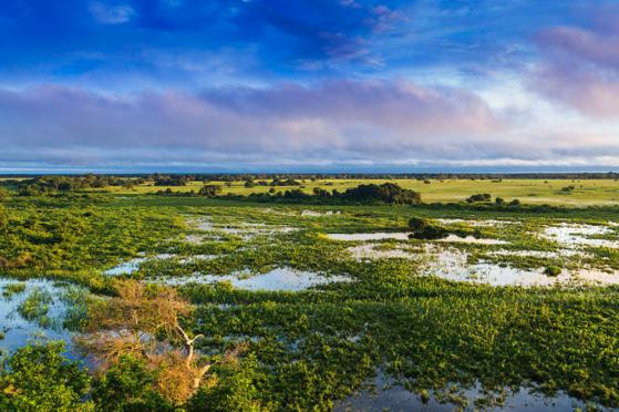 세계 최대 습지인 브라질 판타나우. [구글=Filipefrazao 촬영]