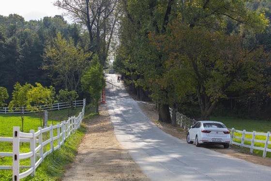 경기도 고양 서삼릉 오르는 길. 깊어가는 가을을 만끽하기 좋은 길이다. [사진 경기관광공사]