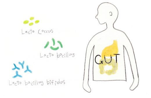 장내 유익균, 내용 출처: 논문 Probiotic Species in the Modulation of Gut Microbiota, 2018.5.8. [그림 밀로베이킹스튜디오]
