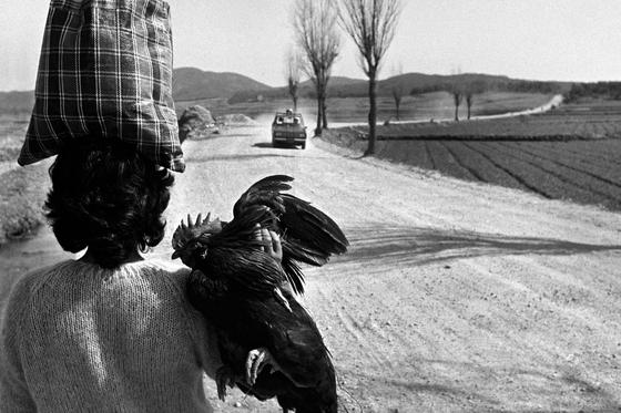 전북 고창(1976·작품 부분), 59x89㎝, 이하 젤라틴 실버 프린트. [사진 김녕만]