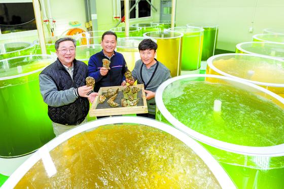 갯벌참굴 양식의 꿈을 키우는 차명호씨와 신상수 신안수산연구소 담당, 박재영 어촌계장.(왼쪽부터) 노랑·초록 수조에는 먹이인 플랑 크톤이 들어 있다. 프리랜서 오종찬