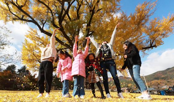 11일 오전 경남 함양군 서하면 운곡리 은행마을을 찾은 한 가족이 은행나무(천연기념물 제406호) 아래서 가을 정취를 만끽하며 즐거운 시간을 보내고 있다. [뉴스1]