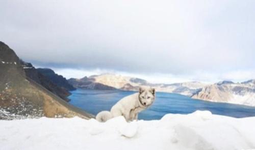 눈덮인 백두산서 발견된 흰색 여우…