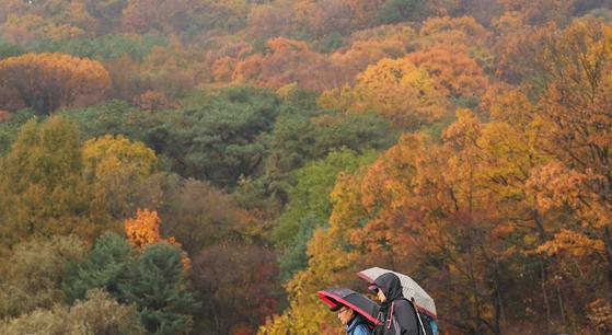 서울과 경기 지역 등에 가을비가 내린 15일 오전 경기도 과천시 서울대공원을 찾은 시민들이 우산을 쓰고 길을 지나고 있다. [연합뉴스]