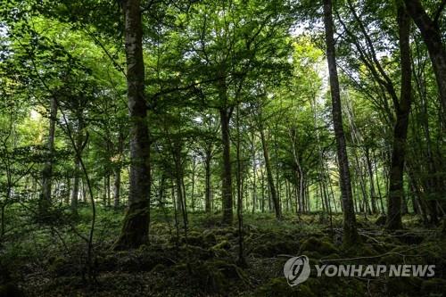 숲 이미지. [AFP=연합뉴스]