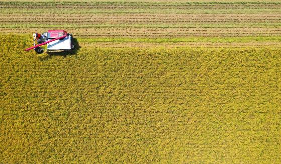 지난 8월 26일 오후 경기도 이천시 율면의 들녘에서 농부가 노랗게 익은 벼를 수확하고 있다. [뉴스1]