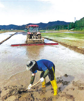 율곡농협의 농작업 대행 사업이 농가의 효자 노릇을 하고 있다. 농협 직원이 고령의 농민을 대신해 논을 고르고 있다. [사진 율곡농협]