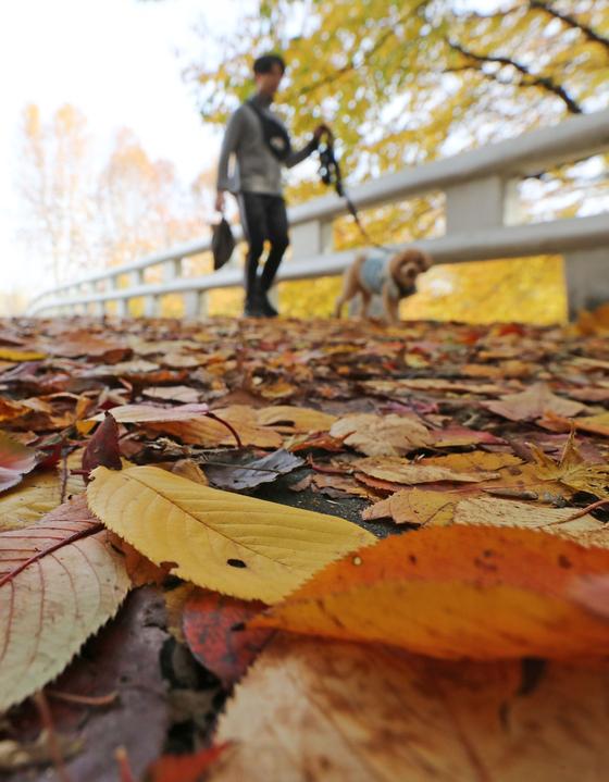 18일 오후 서울 서초구 양재시민의숲에서 두꺼운 외투를 입은 시민이 발걸음을 옮기고 있다. [연합뉴스]