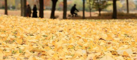 18일 전북 전주시 덕진공원에 산책을 나온 시민들이 낙엽을 따라 거닐며 멀어져가는 가을의 정취를 만끽하고 있다. [뉴스1]