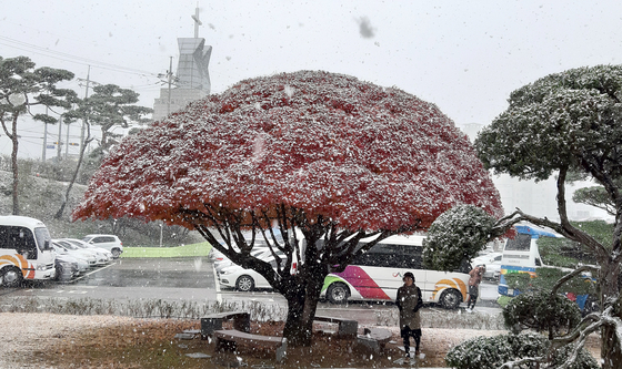 4일 새벽까지 서해안 지역에 눈이나 비가 내리겠다. 충청권 기온이 영하로 떨어진 지난달 19일 충남 서산시청 내 단풍나무에 첫눈이 내려앉았다. [연합뉴스]