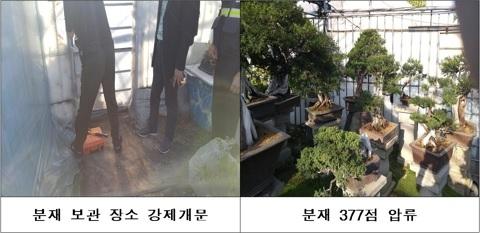 국세청은 체납자가 은닉한 수억원대 분재 377점을 찾아내 압류했다. [국세청]