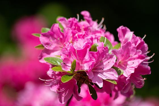 추운 겨울을 나야 하는 식물은 그에 알맞은 온도를 유지해주어야 봄에 아름다운 꽃이 핀다. 그런 현상을 '춘화 현상'이라고 부른다. [사진 pixabay]