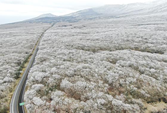 대설(大雪)을 하루 앞두고 올겨울 가장 추운 날씨를 보인 6일 한라산 1100고지의 설경이 장관을 이루고 있다. [뉴스1]