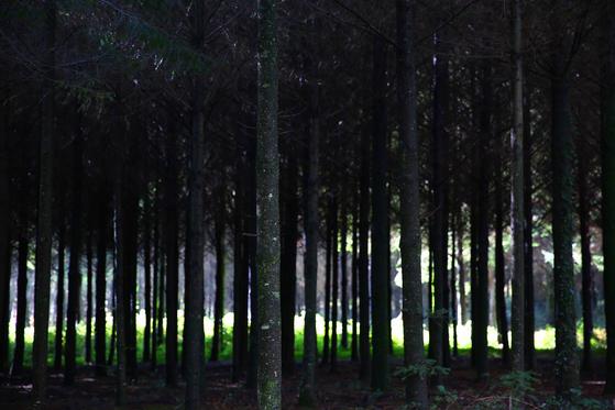 산티아고 순례길의 숲은 의외로 깊었다. 깊은 숲에 마침 햇볕이 들었다. 비가 내려 가방에 넣었던 카메라를 얼른 꺼냈다. 셔터를 몇 번 누르자 다시 비가 내렸다.