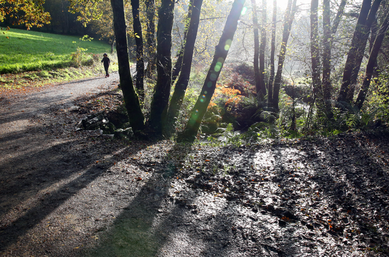 비가 잠깐 그치자 나무 사이로 햇빛이 들어왔다. 길바닥은 질었지만, 걸음은 가벼웠다.