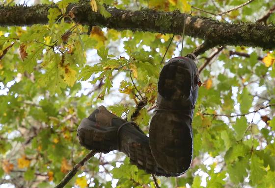 유칼립투스 나뭇가지에 누가 걸어놓은 신발 한 켤레. 이 높은 가지에 어떻게 신발을 올렸을까 궁금했다.