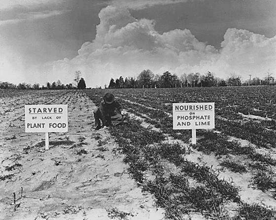질소비료의 놀라운 효과를 보여주는 사진. 과학 기술의 발전으로 인류는 식량난을 해결할 수 있게 되었다.[사진 wikipedia.org]