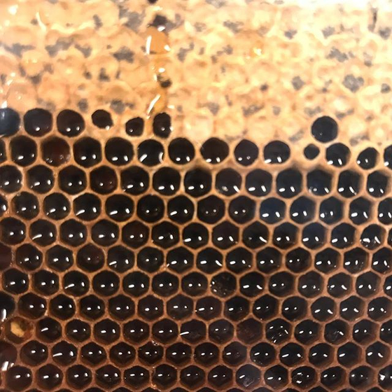 건강한 꿀벌은 도시의 생태계를 복원한다. 녹지 비율 높은 선진 도시에서 도시 양봉에 주목하는 이유다. [사진 아뻬 서울 인스타그램]