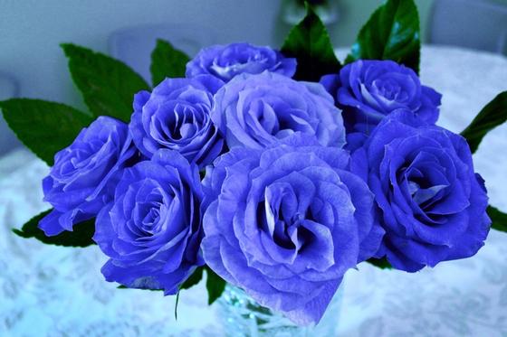 우리가 진리로 받아들이던 고정관념을 깨야 한다. 과거에 불가능을 얘기할 때 쓰던 'Blue Rose'는 엄연히 파란 장미로 세상에 존재한다. [사진 pxhere]