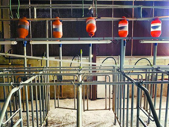아프리카돼지열병(ASF)이 발병한 한 농가의 돈사. [중앙포토]